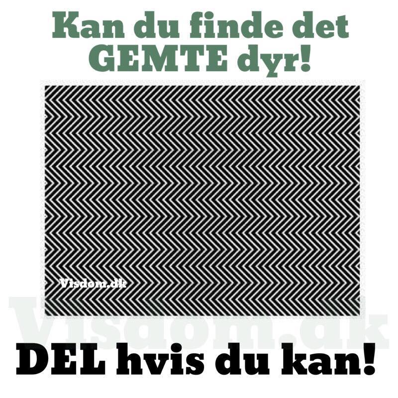 billeder med citater på dansk gemte   Sjove billeder, Danske citater, skøre jokes, Danske  billeder med citater på dansk