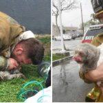Lokal brandmand er blevet hyldet efter han redder hund fra ildebrand: Han giver-mund-til mund i 20 minutter