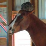 Nancy skulle kigge til sin hest i stalden: Tusindvis griner nu af denne sjove video.