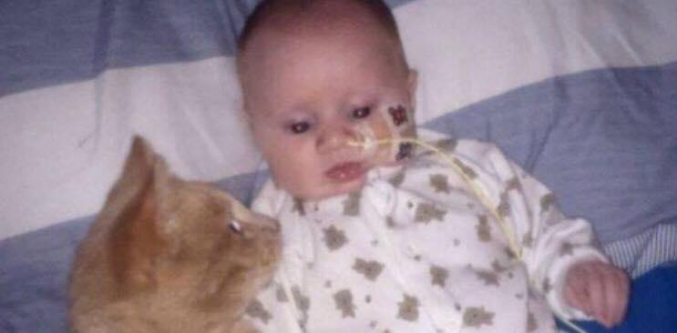 Nyfødt dreng er født med yderst alvorlig hjertefejl - nu har kattens reaktion på dette, taget verden med storm.