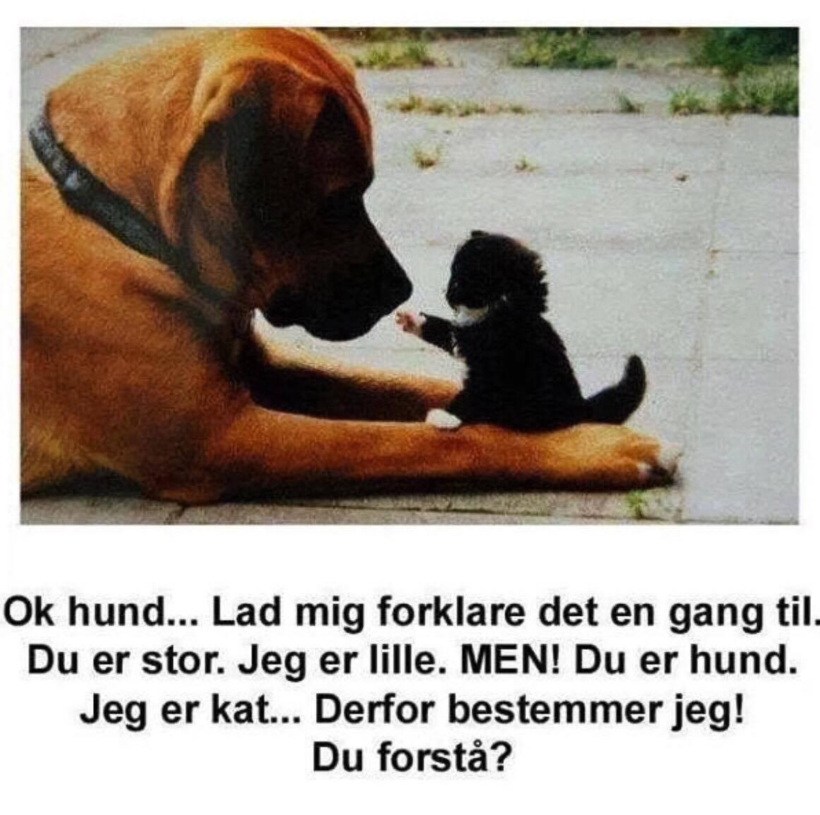 citater om hunde og mennesker OK   Top citater, Find dine yndlings billeder hverdag på visdom.dk citater om hunde og mennesker
