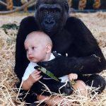 Tansy voskede op med Gorillaerne: 12 år senere genforenes de i rørende øjeblik!