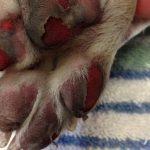 Dyrlæge advarer ALLE hundeejere!
