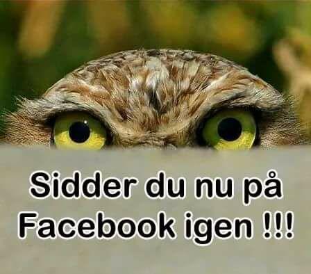 citater på facebook Facebook   Danmarks bedste citater, ordsprog og budskaber til dig citater på facebook