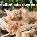Sov dejligt min skønne ven