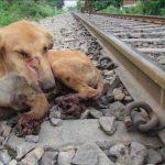 Sporarbejderne ser en kvæstet hund ved skinnerne – så tager de en afgørende og vigtig beslutning