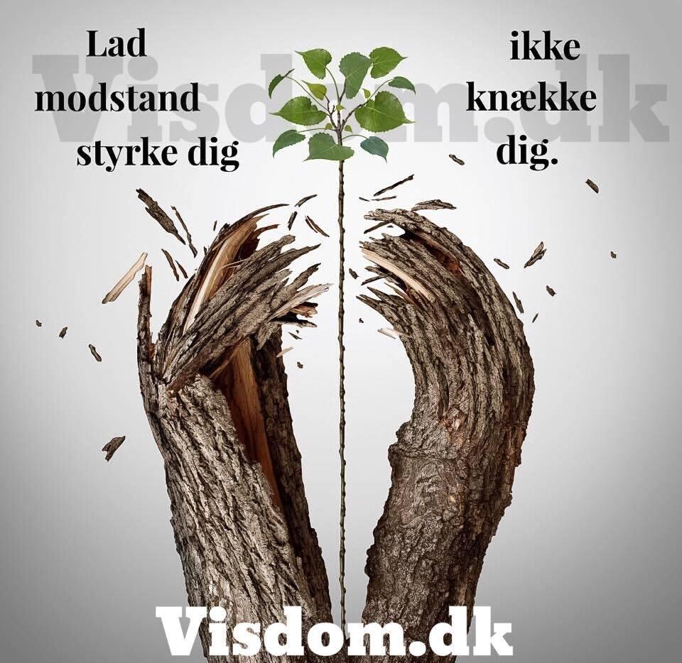 citater om styrke styrke   TOP citater, Find dine nye yndlings citater på visdom.dk citater om styrke