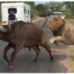 Turister oplever det mest chokerende i mens de sidder i bilen – den havde de ikke set komme!