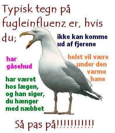 citater om fugle Typiske tegn på..   Find flere citater her på .visdom.dk citater om fugle