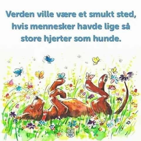 citater om hunde og mennesker Verden   Smukke danske citater, citater om livet, citater om  citater om hunde og mennesker