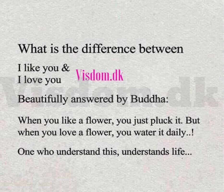 what is the difference between I like you & I love you Beautifully answered by Buddha: when you like a flower, you just pluck it. But when you love a flower, you water it daily..! One who understand this, understands life...