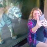 Tiger sniger sig op bag gravid kvinde – se nu hvor den får øje på maven