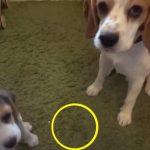 Ejeren spørger sine to hunde, hvem af dem der har tisset på tæppet – flere tusinde har nu set den morsomme reaktion