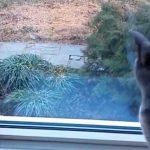 To katte kigger ud ad vindue – hvad der sker er dybt fascinerende