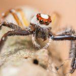 Ekspert slår fast: Hvis du har denne plante i hjemmet, så kan du slippe af med edderkopper og mus!