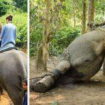 ADVARSEL: Skrækbillederne chokerer ALLE: Viser sandheden om elefantridning!