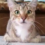 Ejeren ser sin kattekilling se gyserfilm – den utrolige reaktion har fået millioner til at grine!
