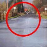 Utroligt syn: Bilisterne kan ikke tro deres egne øjne- da noget stort, uventet og levende pludselig forsøger at komme over vejen!