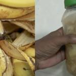 Se videoen:  Efter dette kommer du ALDRIG til at smide en bananskræl ud – årsagen er simpelhen genial!