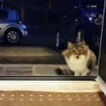 Se videoen: Hjemløs kat håber familien vil lukke den ind i huset, men de indser hurtigt at hun ikke er alene!
