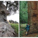 11 uhyggelige træer, som med sikkerhed får dig til at skrige – nummer 6 fik mig til at få kuldgysninger!