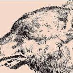 bjørn – kan du se dette?